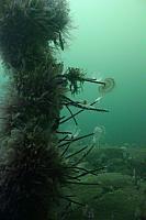 Dive Site Photos